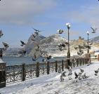 Сезонное жилье в Орджоникидзе